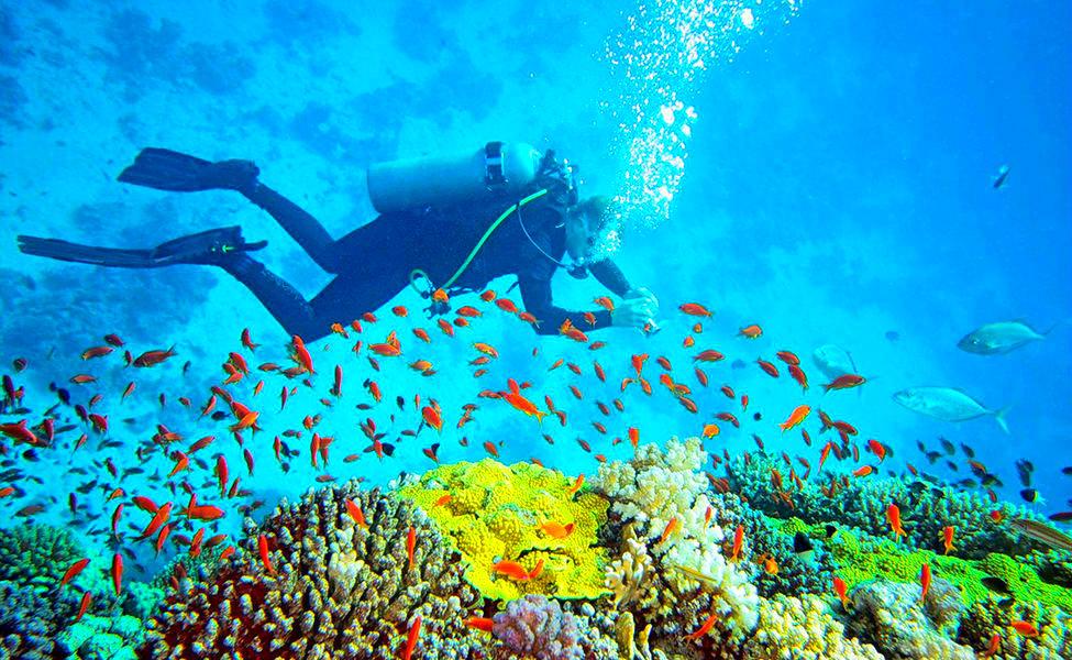 andaman diving