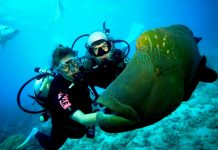Scuba diving in india destination of all time
