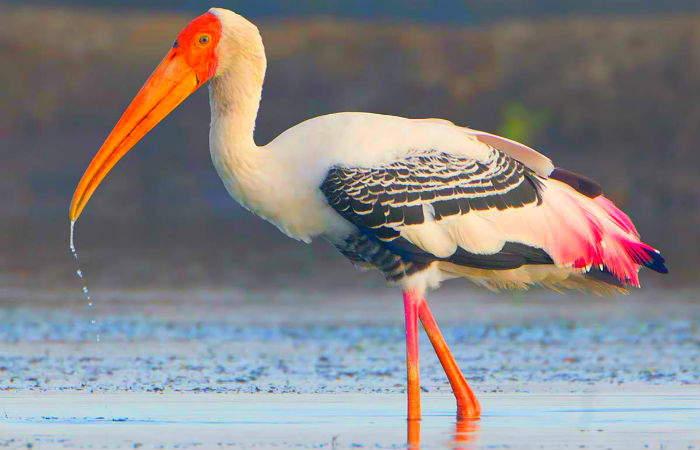 Pulicat Lake & Bird Sanctuary