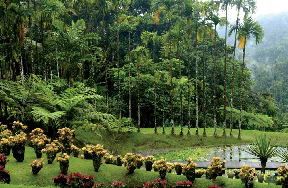andromeda-gardens