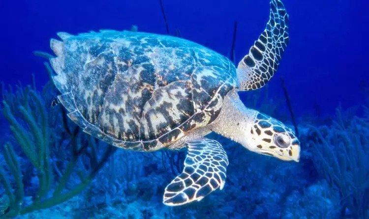 mahatama gandhi marine national park