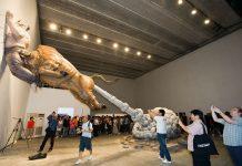 weird museums in the world