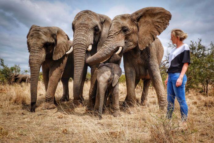 Adventures With Elephants, Limpopo