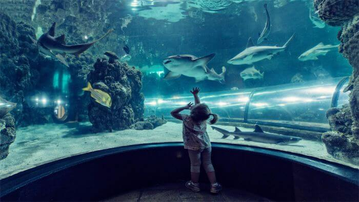 Denmark shark centre