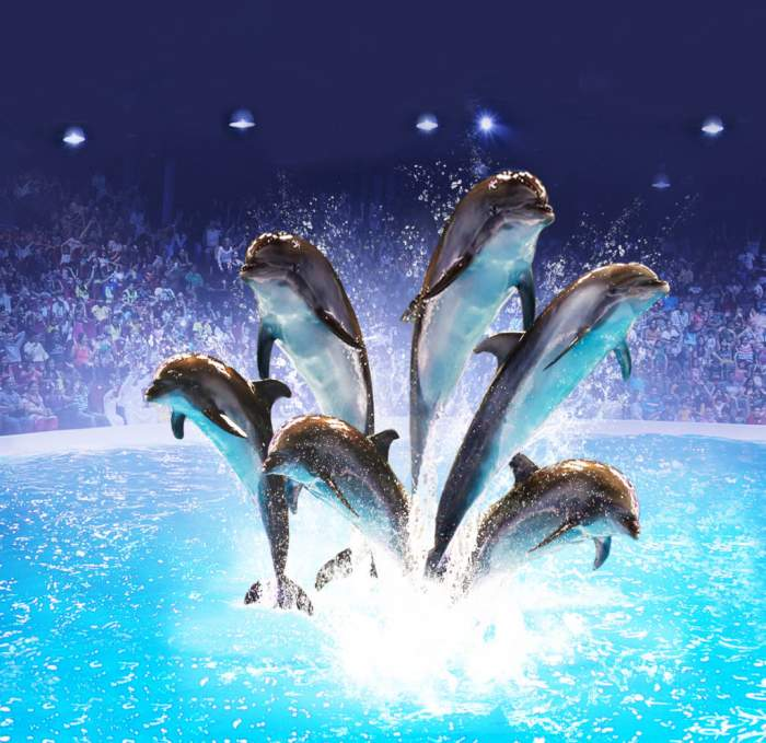 Dubai dolphinarium in the United Arab Emirates