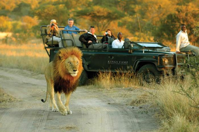 South Africa, See The Big Five
