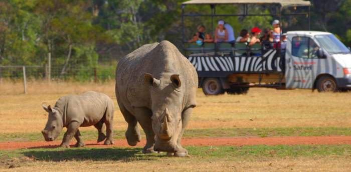 Off-Road At Werribee Zoo