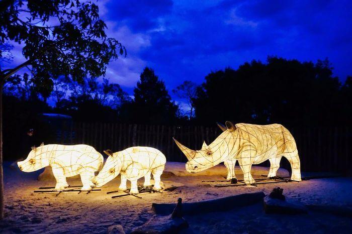 Werribee Zoo Night Safari