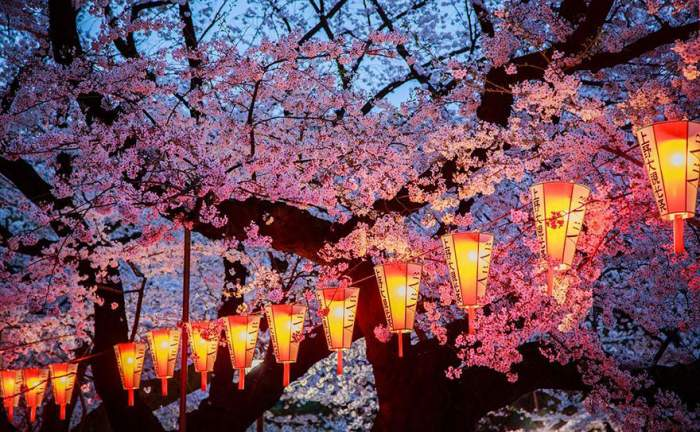 spring japan cherry blossoms