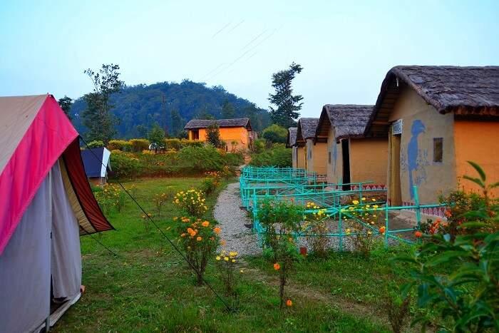 Sattal Birding Camp